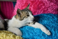 A Beautiful Kitten sitting on a cushion with colorful background.