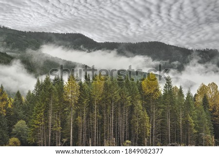 A beautiful landscape with tall colorful trees and mountains covered with early morning fog in Federation Forest Park, Washington Stok fotoğraf ©