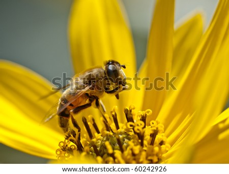 a beautiful little bee on a yellow flower