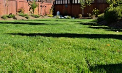 A beautiful low angle view of  green lawn grass surrounded by formal landscaped garden in a sunken garden design