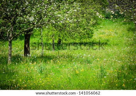 A beautiful meadow with wild flowers in early Summer in England, UK