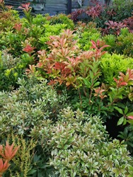 A beautiful mix of green garden plants. Plant nurseries. Ornamental plant in a flower shop. Vertical photo plants with green leaves. Beautiful low green bushes outdoors. Design of a garden