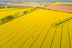 A beautiful morning over the rapeseed field.