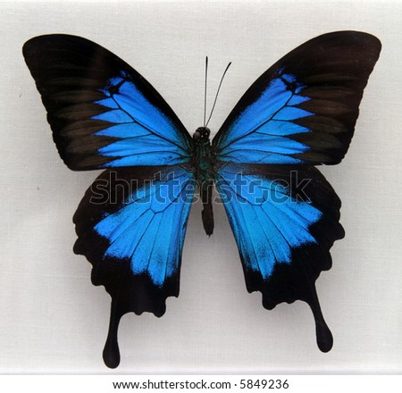 a beautiful moth or butterfly