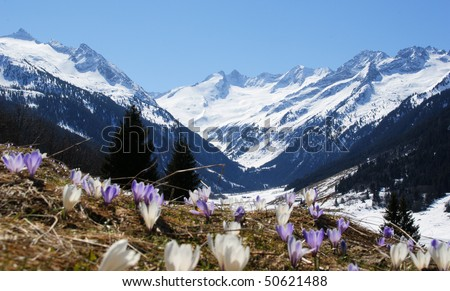 A beautiful mountain landscape with a flower meadow in the foreground. - stock photo