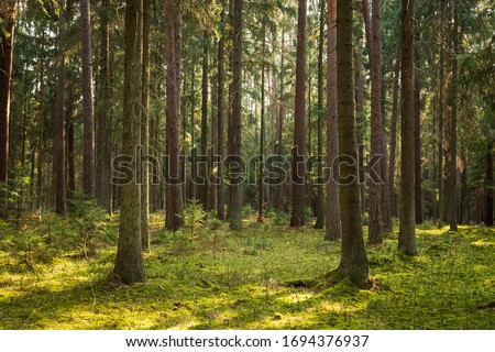 A beautiful natural forest in the Knyszyńska Forest