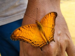 A beautiful orange butterfly perched on a human hand.