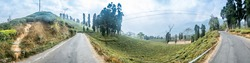 A beautiful panoramic view of a road winding through Rongli Rongliot Tea Estate of Darjeeling, West Bengal, India