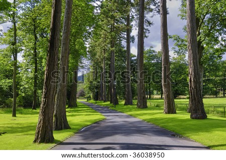A beautiful path with lined trees on both the sides in the Forest of Bowland in Lancashire, England