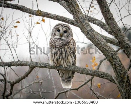 A beautiful picture of an Owl in a tree