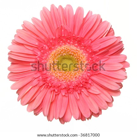 a beautiful pink flower
