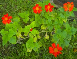 a beautiful plant having orange flower on it and grean leaves