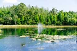 A beautiful pond in a community of Florida