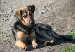 A beautiful puppy on the street looks at the photographer. Stray dog. Portrait.