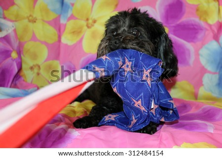 A beautiful purebred female black Maltese Puppy smiles as she lays upon a colorful flower pattern silk background as she has her portrait taken. White Dogs are loved by people around the world.