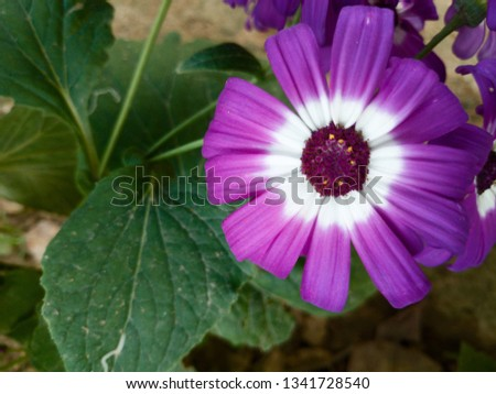 A beautiful purple nad white flower with a contrasty green background. #1341728540