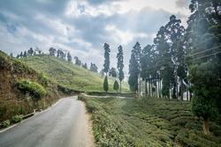 A beautiful road crossing through lush green tea gardens of Darjeeling