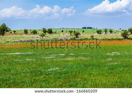 a beautiful rural landscape with poppies and blue sky