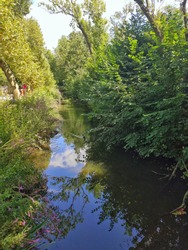 A beautiful scenery at the zoo, river with green foliage around it.