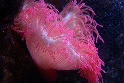 a beautiful sea anemone