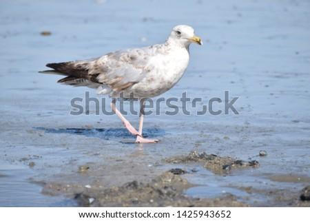 A beautiful seagull photo at ocean