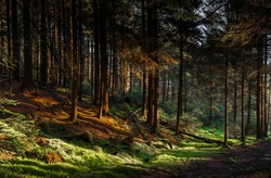 A beautiful shot of colors of light in a dense  forest, Sheffield, UK