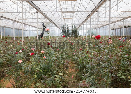 A beautiful shot of Garden of rose in DaLat, VietNam