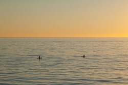 A beautiful shot of paddle boarders sup surfing on the water at sunset