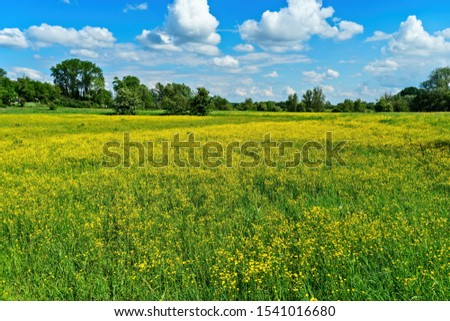 A beautiful shot of yellow flower fields with trees in the distance under a blue cloudy sky at daytime #1541016680