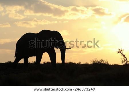 WILDLIFE AT SUNSET/SUNRISE