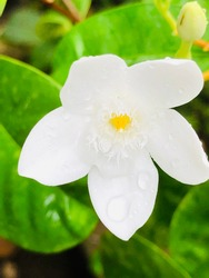 A beautiful simple white flower