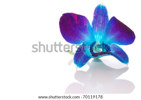 stock photo A Beautiful Single Blue Orchid Flower on White with Reflection