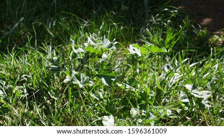 A beautiful stood out patch of naturally grown greenery.
