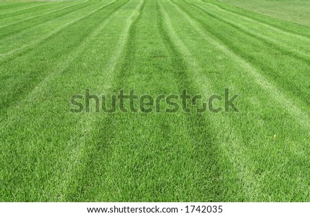 a beautiful striped lawn