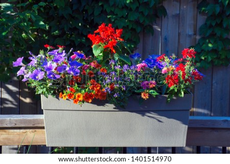 A beautiful summer container filled with annual flowers brings color and hummingbirds to a backyard deck. Pollinator bees are also welcome visitors for the hobby gardener, and for farmers.