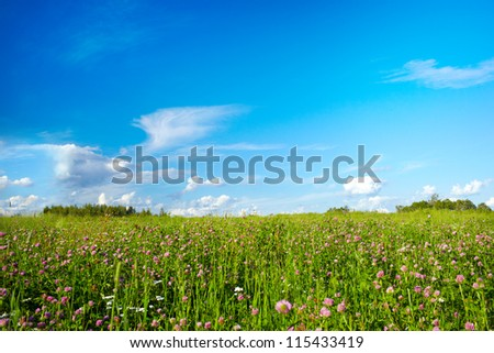 A beautiful summer field with meadow flowers. The blue sky with white clouds.