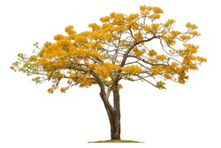 A Beautiful Summer Tree In Thailand