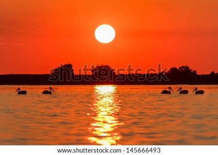 a beautiful sunrise in the Danube Delta, Romania