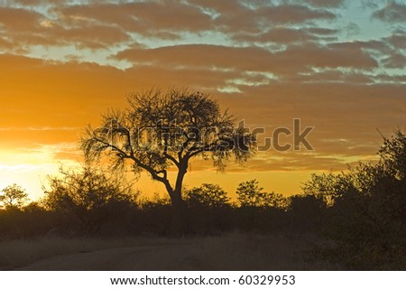 A beautiful sunrise in the Shingwedzi area of Kruger Park