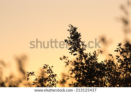 a beautiful sunset on a background of trees #213125437
