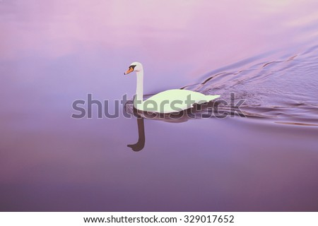 Stock Photo A beautiful swan is swimming on a silent river. Image is taken above the bird and has a vintage effect applied.