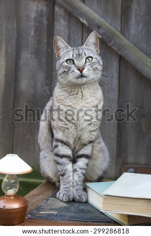 A beautiful tabby cat sitting on a chair near the books and a lamp