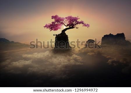 a beautiful tree on a rock