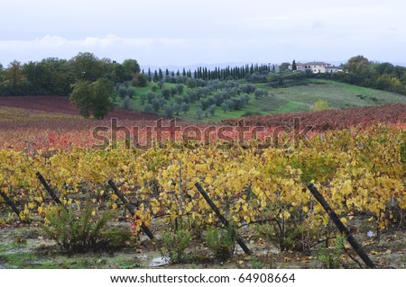 A beautiful Tuscany autumn landscape with vineyard, olive grove and a villa.