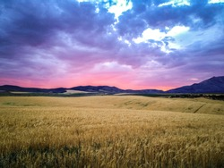 A beautiful vibrant sunset on a cloudy summer evening, overlooking a golden wheat field surrounded by mountains in Idaho country