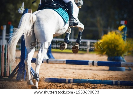 A beautiful white horse with a waving tail jumps over the blue barrier, raising dust with its hooves, at a show jumping competition.