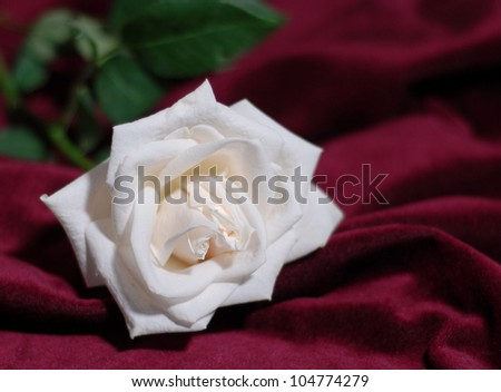 A beautiful white rose blossom on a rich, red velvet background with shallow depth of field