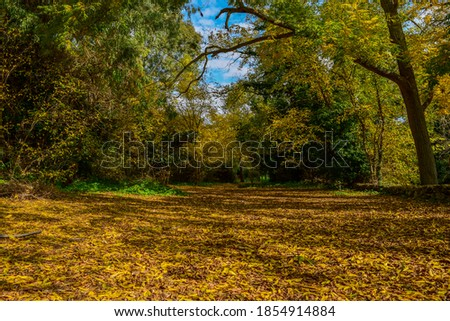 A beautiful winter day in Buskett woodland, Malta. Leaves had been falling since autumn, covering the ground and making it golden.