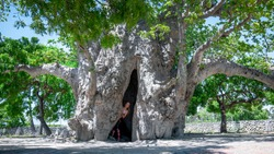 A Beautiful Woman in the Hollow of the Baobab Tree in the Delft Island, Sri Lanka