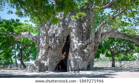 A Beautiful Woman in the Hollow of the Baobab Tree in the Delft Island, Sri Lanka Foto stock ©